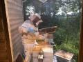 Abri de démonstration apicole – l'apiculteur