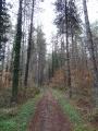 Le Chemin du Tour des Bois