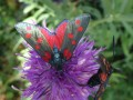 Les papillons de la Forêt de Beynaves