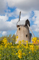 Moulin Blanc (Offekerque)