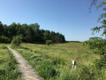 Passerelle sur le marais