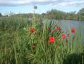 Vue de printemps sur le canal du Rhone à Sète
